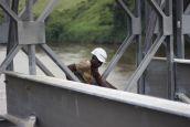 Bridge Installation Congo